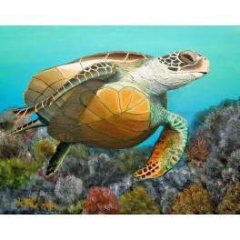 Swim Free Fine Art Paper